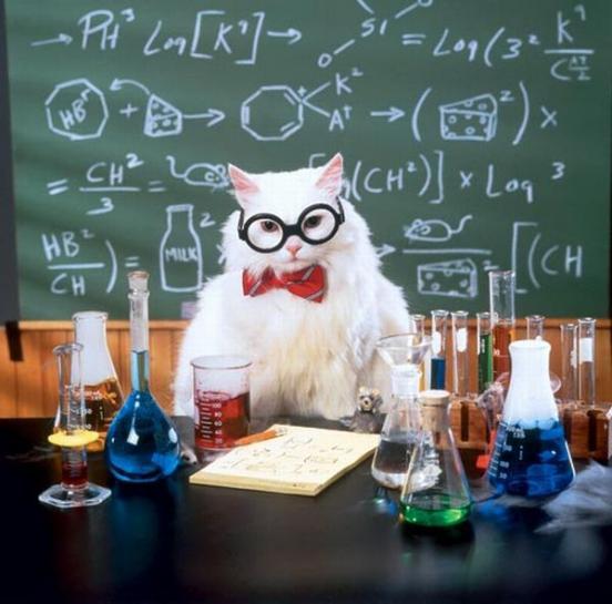 Data Chemistry Cat